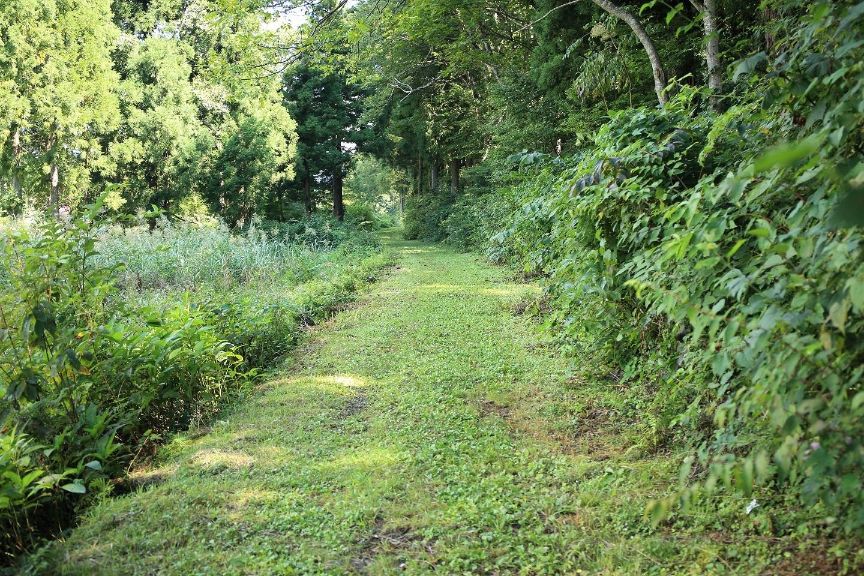 昔懐かしい草の道 ブログ用.jpg