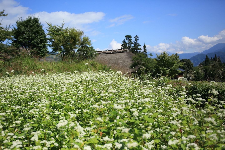 信州そばに茅葺の家 ブログ用.jpg