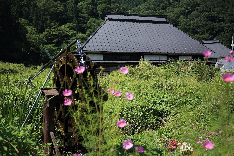 道端のコスモスと水車 ブログ用.jpg