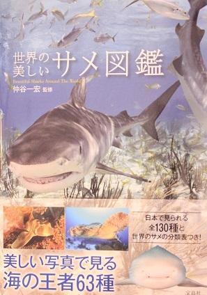 世界の美しいサメ図鑑_仲谷一宏先生