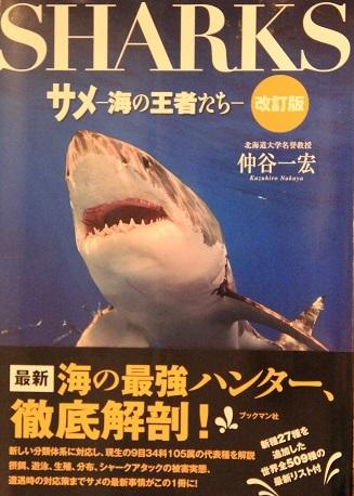 0482_SHARKS_仲谷一宏