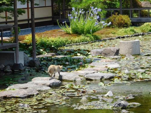 庭園の猫がうらやましいなあ!