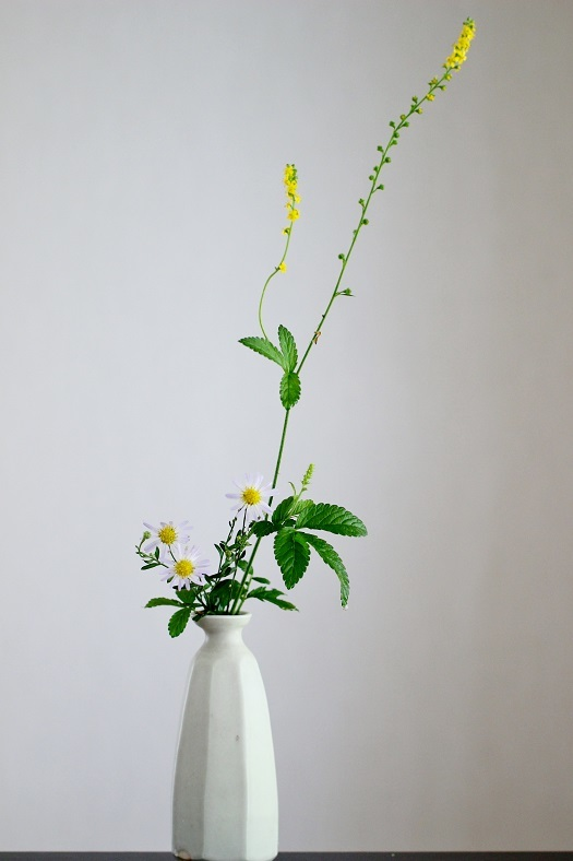 キンミズヒキ 野菊