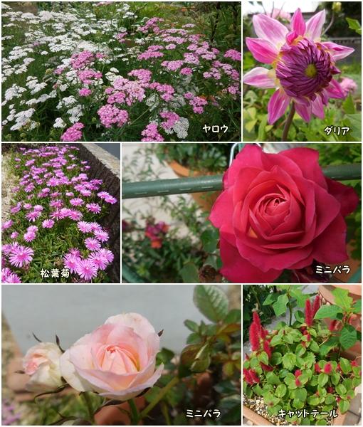 庭の花 6月29日 2017