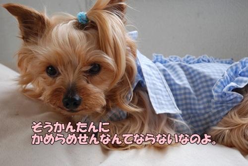 DSC_00030614.jpg