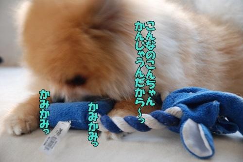 DSC_00050603.jpg