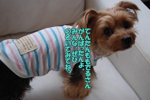 DSC_00061010.jpg