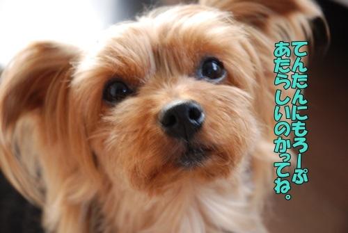 DSC_00070603.jpg