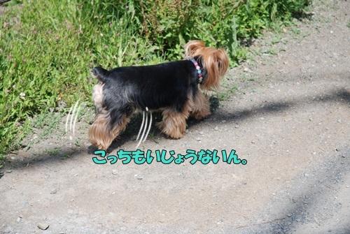 DSC_00080604.jpg