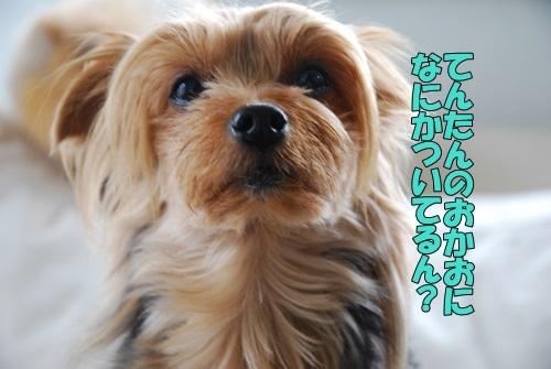 DSC_00100514.jpg