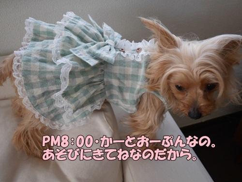 P1060512.jpg