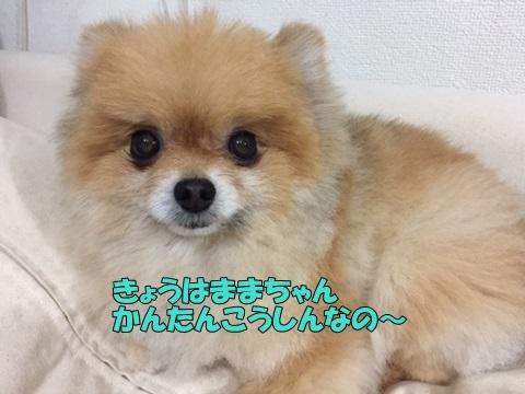 image10514.jpg