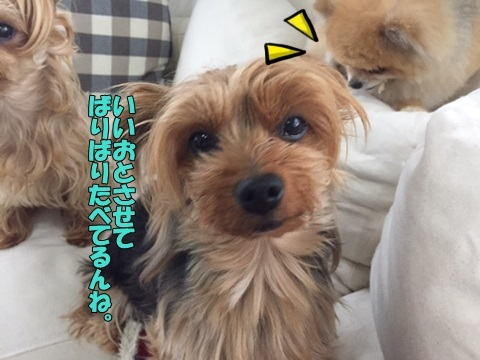 image10515.jpg
