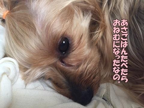 image1051701.jpg
