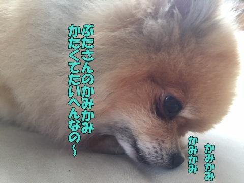 image10523.jpg