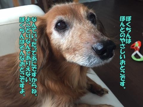image1060601.jpg