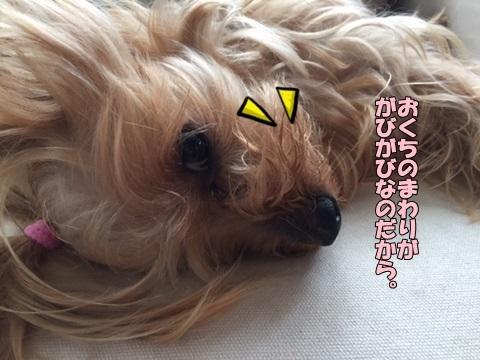 image10812.jpg