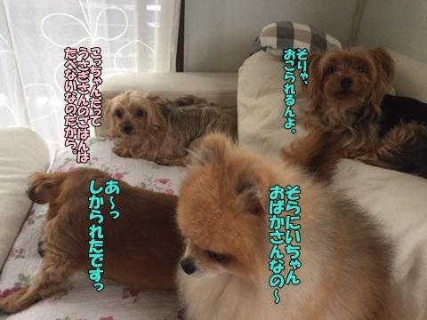 image108270101.jpg