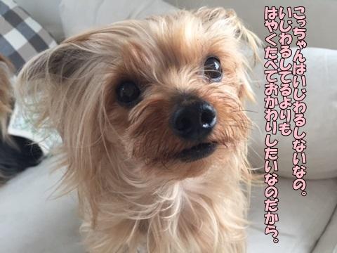 image20606.jpg
