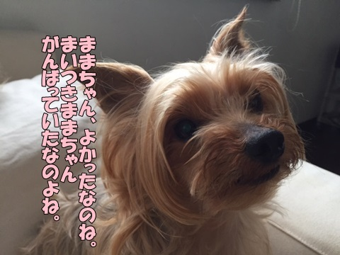 image2062103.jpg