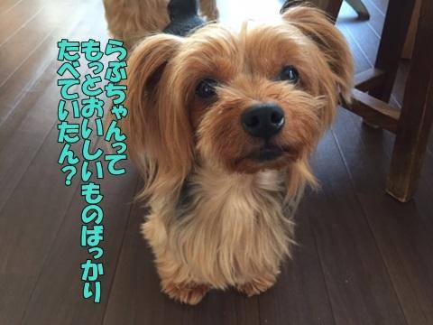 image2091101.jpg