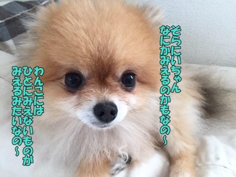 image3061403.jpg