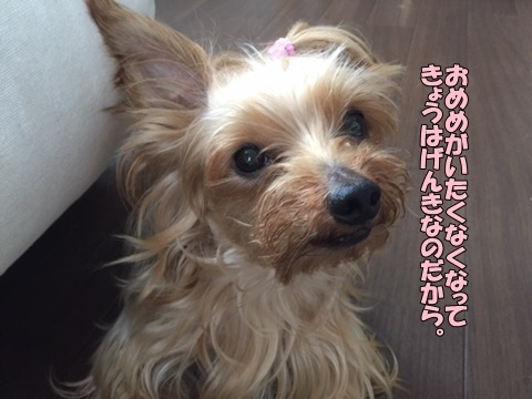 image3081101.jpg