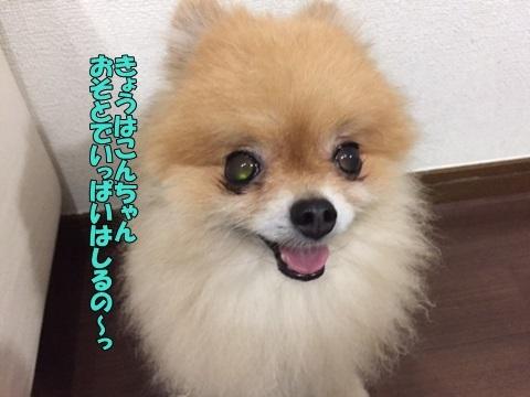 image30813.jpg