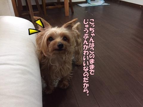 image40806.jpg