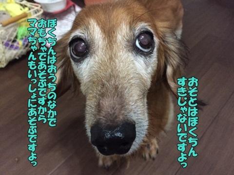 image40813.jpg