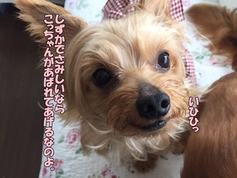 image5090101.jpg