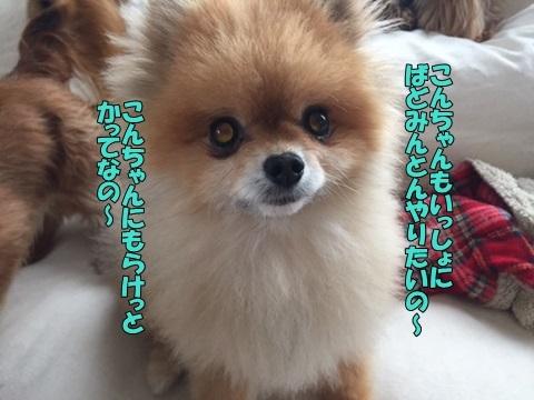 image60601.jpg