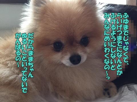 image70611.jpg