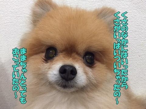 image80806.jpg