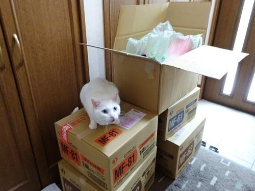 猫ごはん届く♪