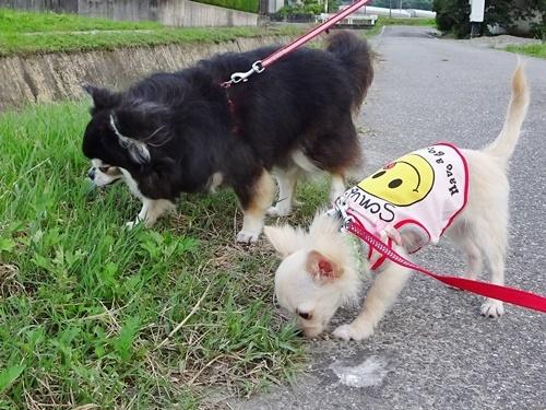 ご近所散歩 ナッツ&柚子♪