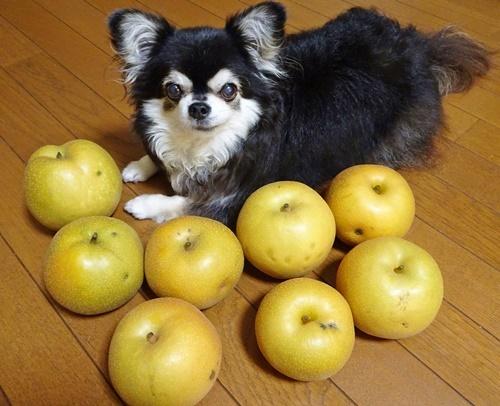梨の季節です♪