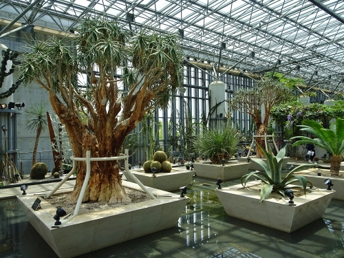 奇跡の星の植物館