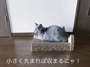 20170725-1502b.jpg