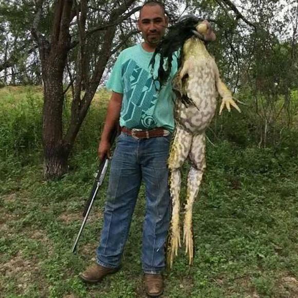 【デカすぎ】カッパ伝説の正体はカエルだった?アメリカで「超巨大カエル」が見つかる!