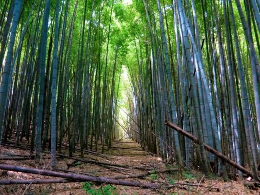 Bamboo897854.jpg