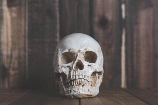 bone7878742453.jpg