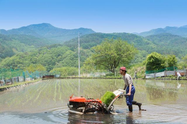 【福島産】避難指示がされていた町でも「米」の田植えを開始、出荷を目指す!
