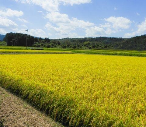 【福島】もう「お米」も安全っぽいので全袋検査はしなくていいかな…今後、検査継続するかを検討