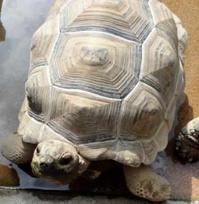 tortoise16878.jpg