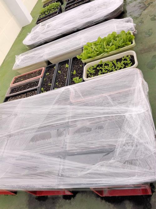園芸の台風対策 防風対策