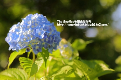 IMG_2017_06_03_9999_177.jpg