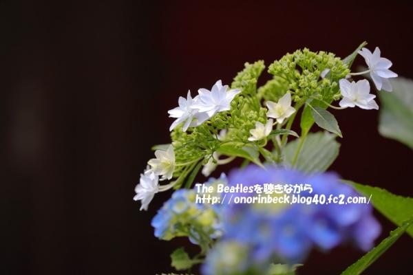 IMG_2017_06_16_9999_180.jpg