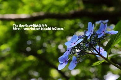 IMG_2017_06_24_9999_23.jpg