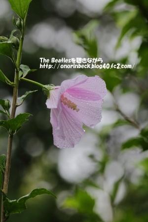 IMG_2017_07_27_9999_147.jpg